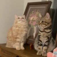 「置き物の猫かな?」 あくび前に謎のフリーズをす…