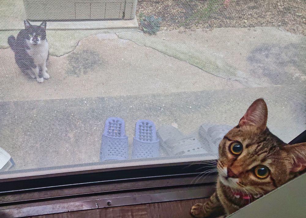 毎日やってくるボーイフレンドのハチワレ猫と愛を育んでいます。