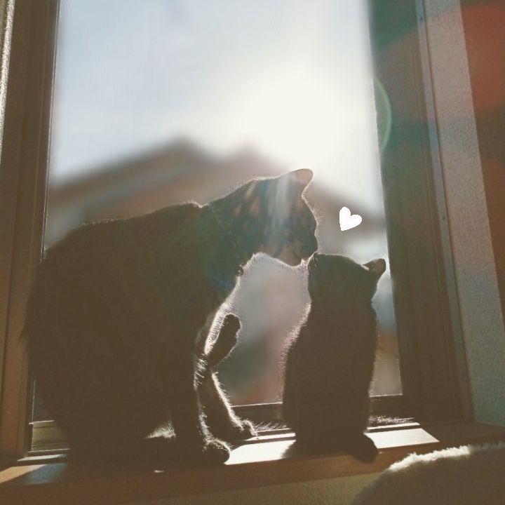 朝からイチャイチャ 仲良しキャッツがほほ笑ましい