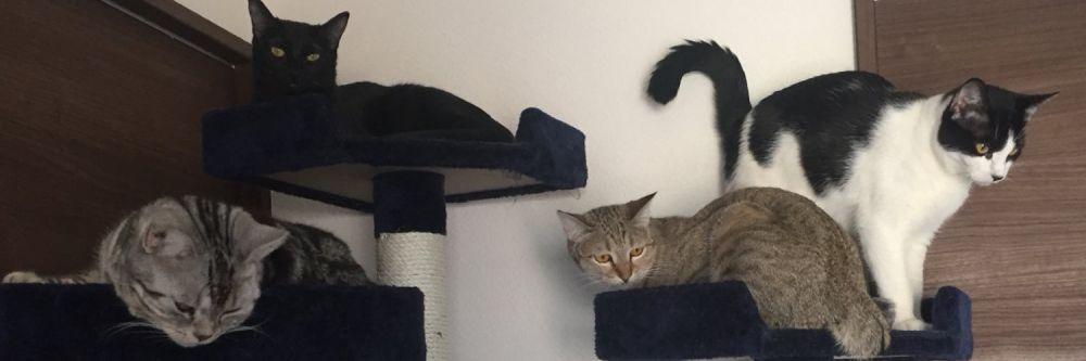 姉妹猫というキキちゃんとララちゃんの総勢4匹の猫と生活している飼い主。