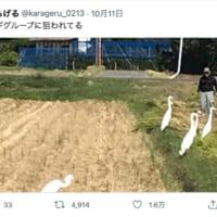 農家を狙うサギグループ!その様子を伝える生々しいツイートが話題