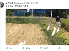 サギグループに狙われる様子を伝えるからげるさんのツイート(スクリーンショット)