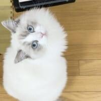 掃除機ぎらいの猫が抗議行動 座り込みして「使わな…