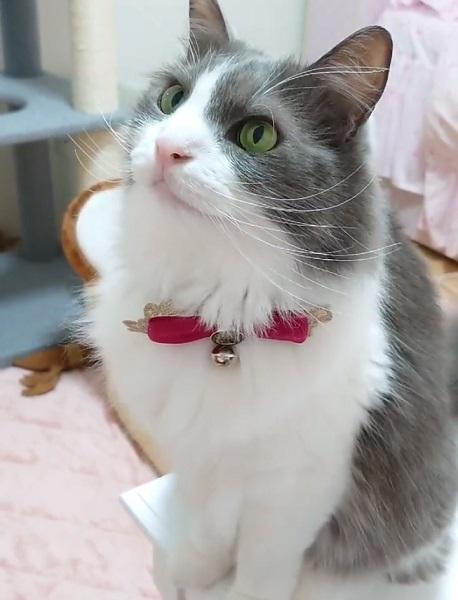 リアル猫まっしぐら 自動給餌器が起動した瞬間に猛ダッシュ
