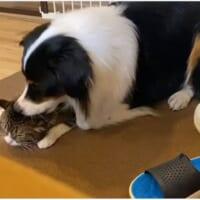 仲良し猫に怒られ反省するワンコ 「ごめんね……」