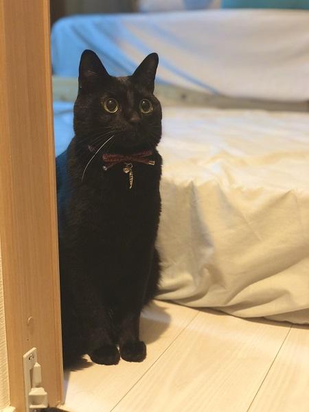 画像提供:黒猫のこねろくさん(@nkknrk)
