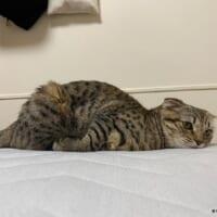 「何もやる気が出ないニャー」ダラダラ……やる気スイッチが完全オフの猫