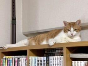 「ここにいるニャ」飼い主の心配をよそにまさかのドヤ顔を披露する猫