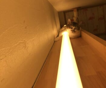 一撃必殺の「猫ビーム」 偶然撮れた照明と猫ちゃんの写真に爆笑