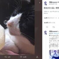 「芸術点が高い」鼻ちょうちんを膨らませて眠る猫