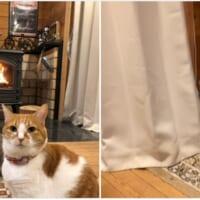 ストーブに対する成猫と子猫の反応の違い 先輩猫は…