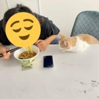 「ねえそれおいしいの?」煮干しラーメンが気になる猫ちゃんの圧が凄い