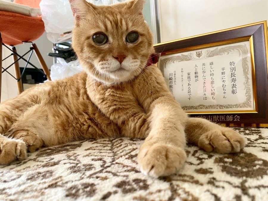 「21歳と5か月」特別長寿表彰を受けた猫ちゃん