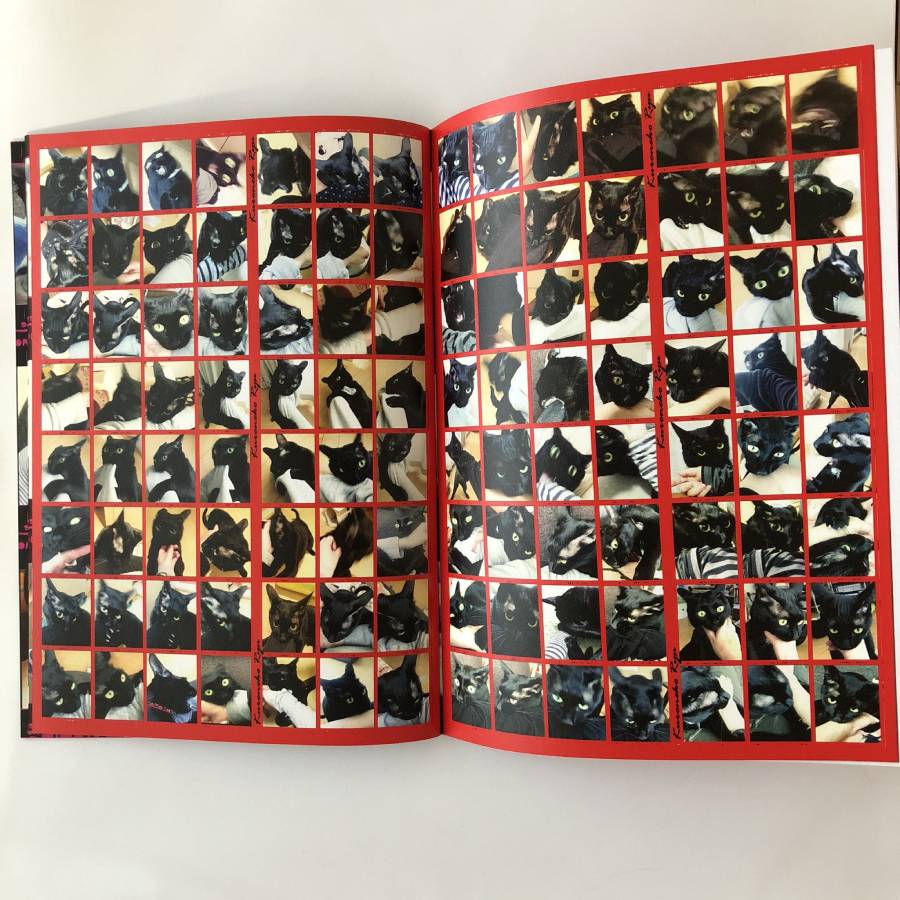 「私が猫に噛まれている写真集」面白アイデア作品に注目集まる