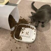 猫vs自動給餌器 朝目覚めてカリカリ食べ放題に飼い主「嘘でしょ?」