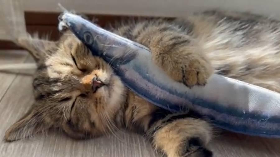 起こされたチョパえもんくんは口は閉じても魚は離しません