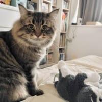 寝込む飼い主を猫が看病 優しさあふれる行動にほっこり